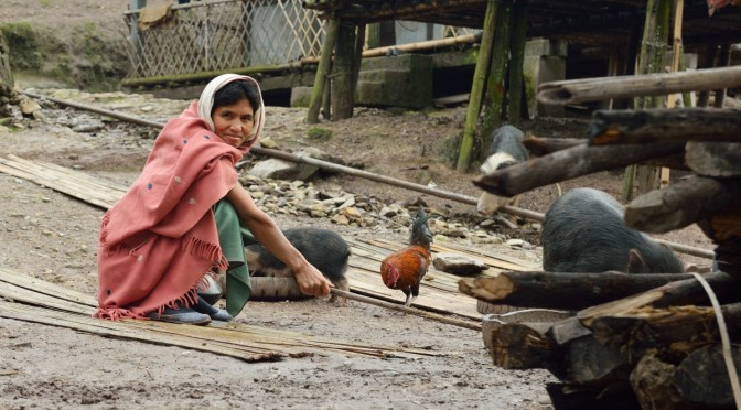 Damroh, tribu Adi, nourrissage des cochons. Il faut aussi chasser ceux des voisins.